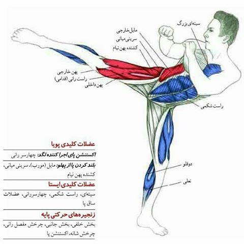 آیکیدو-عضلات درگیر
